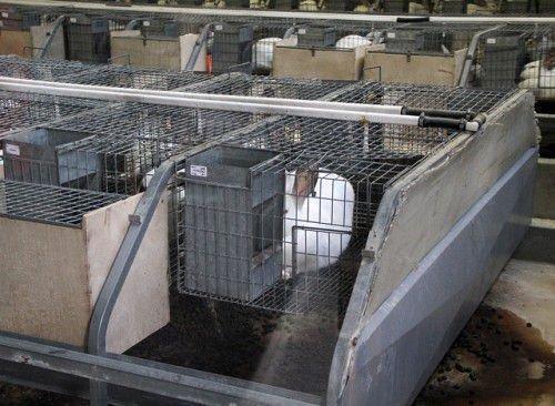 Расходы на кролиководство