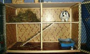 Правила изготовления клетки для декоративного кролика своими руками