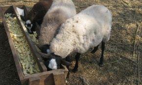 Самодельные кормушки из подручных материалов для овец