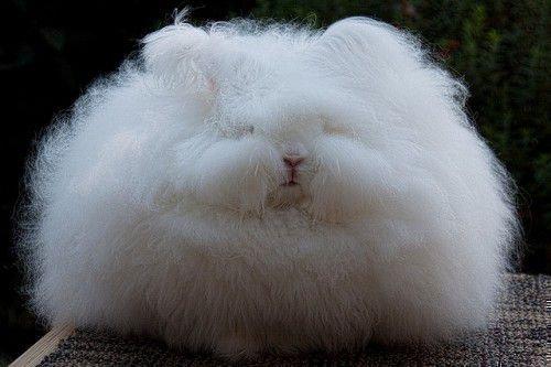 Шерсть ангорского кролика