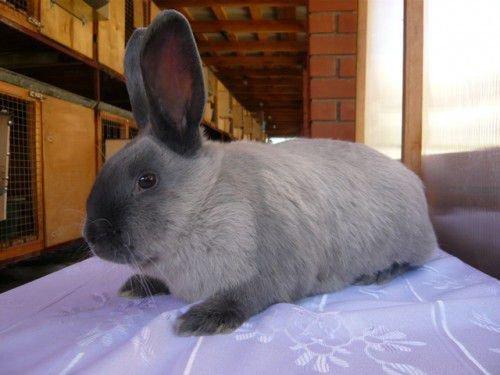 Шкурковый кролик