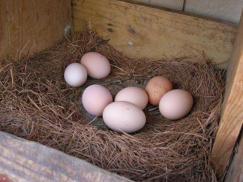 Снижение яйценоскости