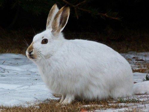 Содержание кроликов на улице