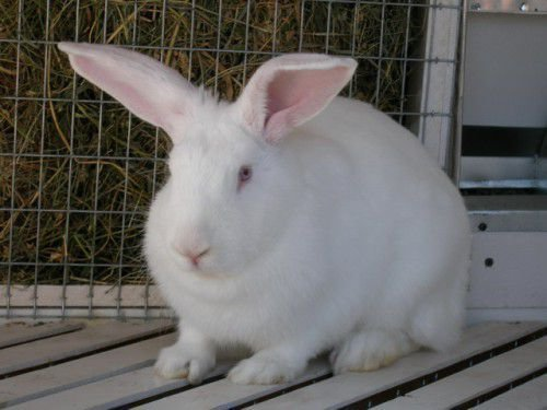 Состояние кролика