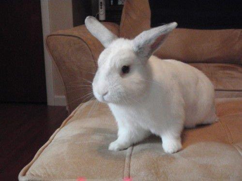 Спокойный кролик