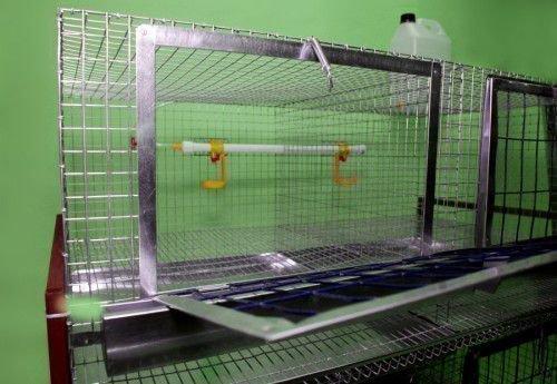 Стандартная клетка для несушек