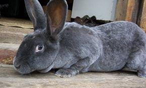 Шубы из меха ценного кролика Рекса