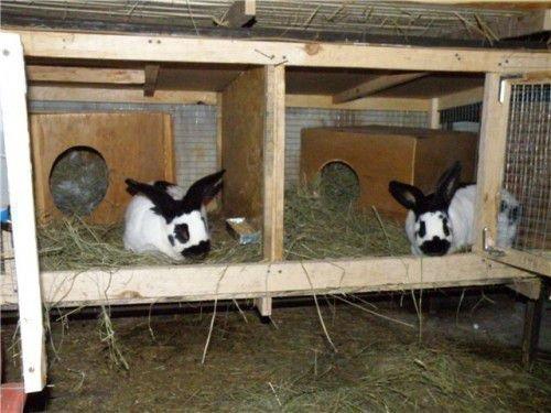 Свежий воздух для кроликов