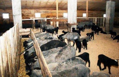 Тепло в овчарне