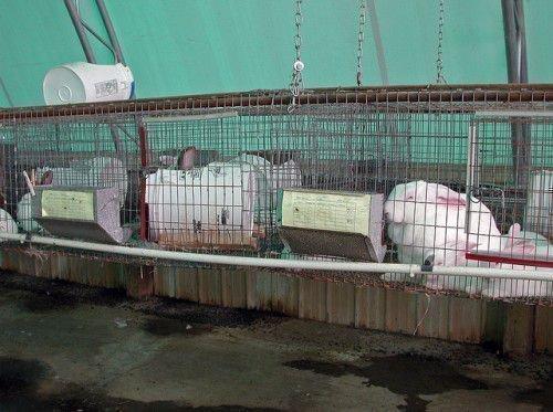 Кролики и влажность