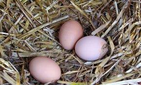 Как правильно кормить кур несушек зимой?