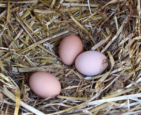 Зимнее падение яйценоскости
