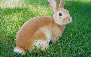 О болезнях декоративных кроликов