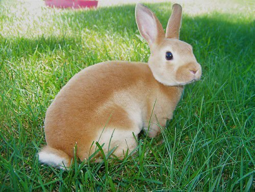 Здоровье кролика