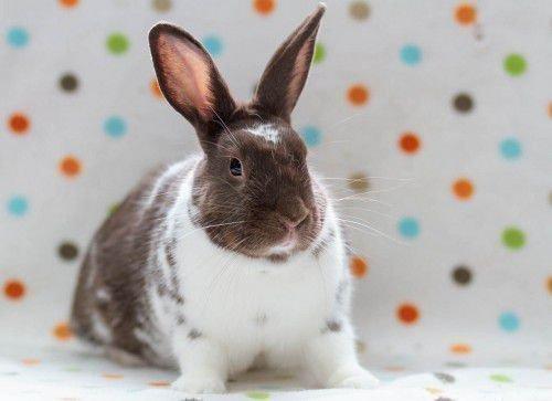 Небольшой кролик