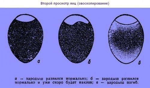 Дефекты яйца