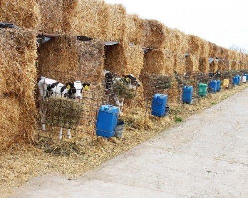 Домик для теленка из соломы