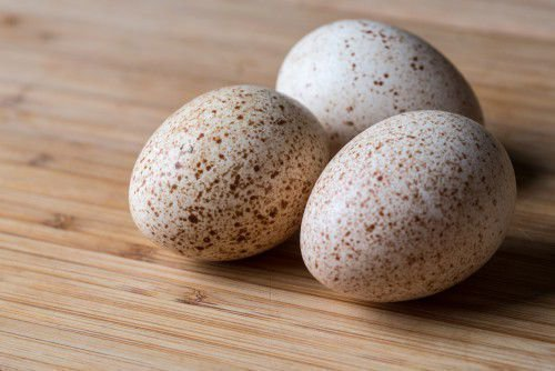 Индюшиные яйца