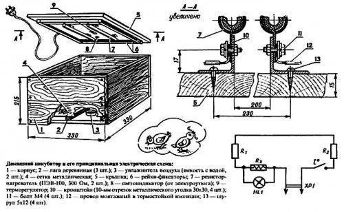 Инкубатор в разрезе