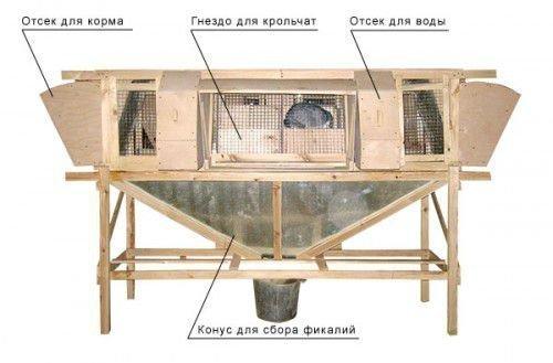 Клетка Михайлова