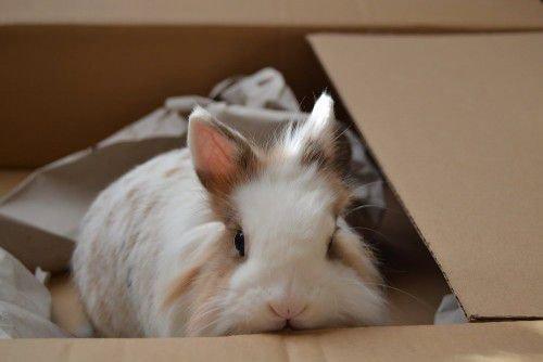 Кролик в коробке