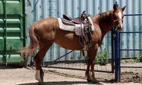 Как правильно седлать лошадь?