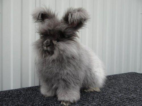 Пуховой кролик