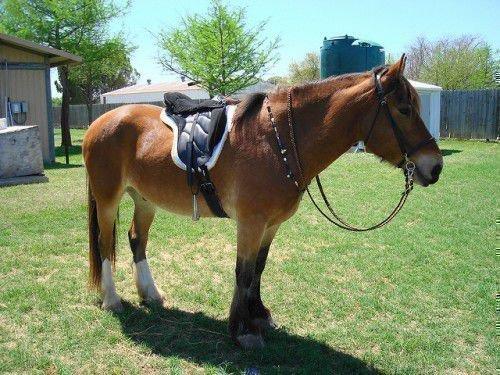 Седло на лошади