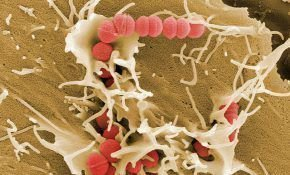 Стрептодермия у коровы, что нужно знать?