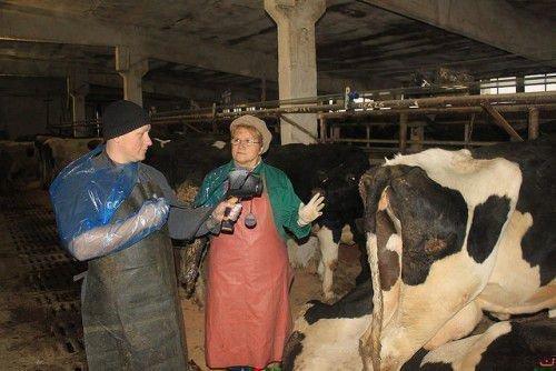 Ветеринар и коровы