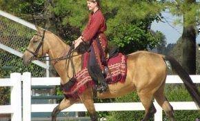 Особенности ахалтекинских лошадей