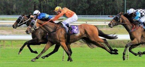 Английский конь на скачках