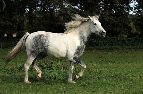 Движение лошади рысью