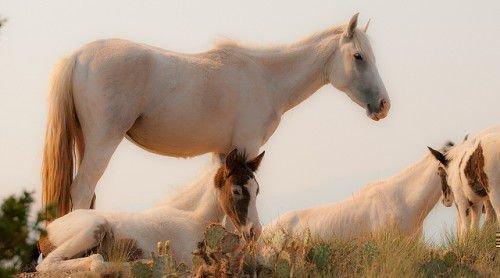 Белые мустанги