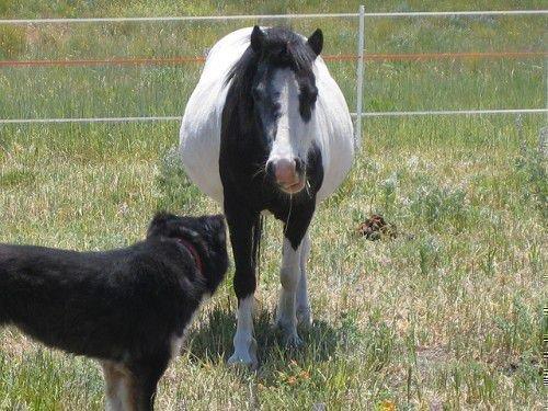 Беременная лошадь