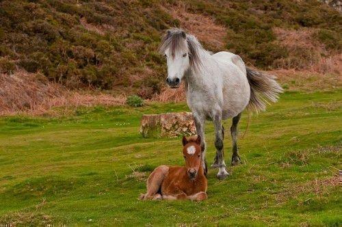 Беременная лошадь на пастбище