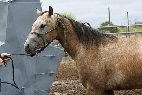 Чалый конь стоит