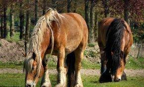 Виды болезней у лошадей