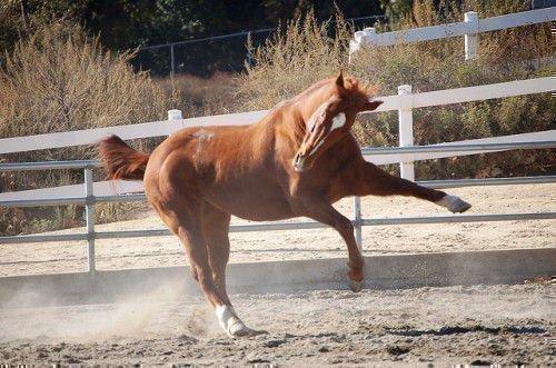 Гнедой конь скачет