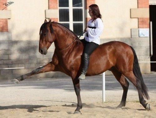 Испанский шаг коня