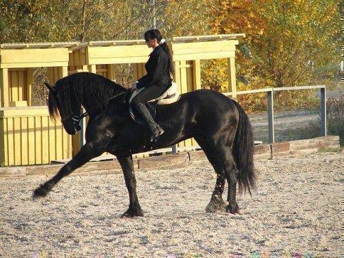 Испанский шаг лошади