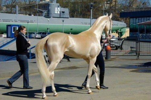Конь изабелловой масти