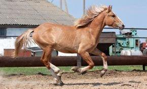 Значимость каурых лошадей.