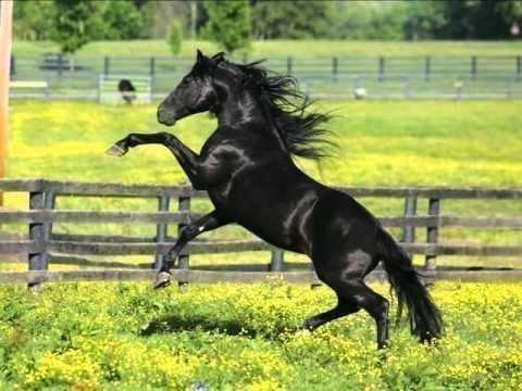 Классический вороной конь