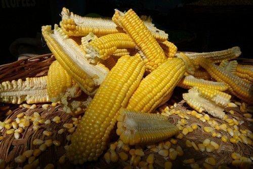 Кукуруза