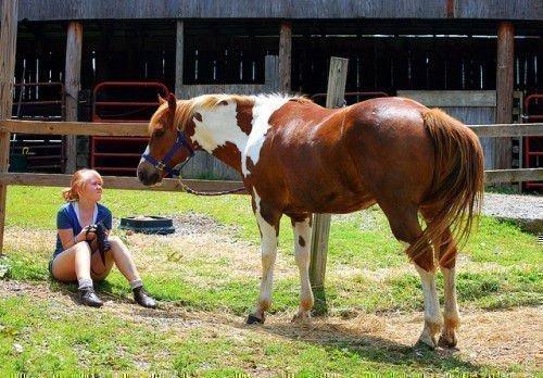 Лошадь и хозяйка