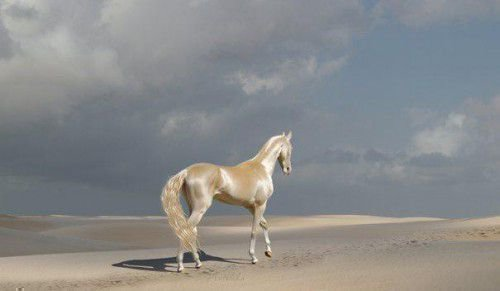 Лошадь изабелловой масти на берегу