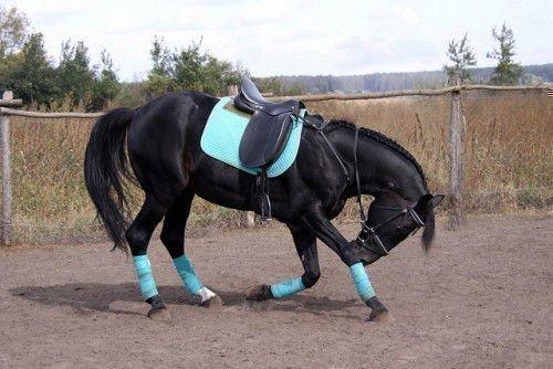 Лошадь кланяется