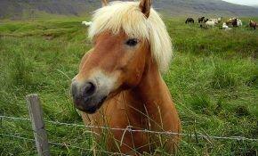 Долголетие лошади: сколько в среднем живет конь