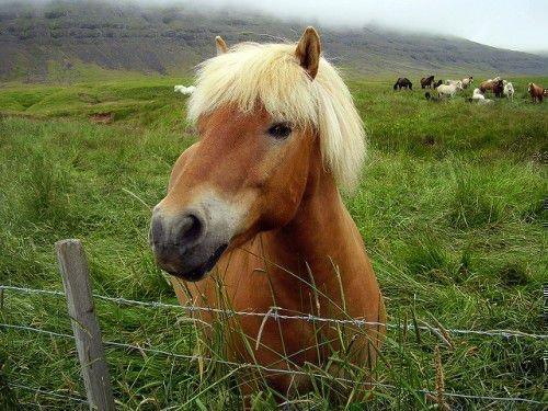 Лошадь с челкой